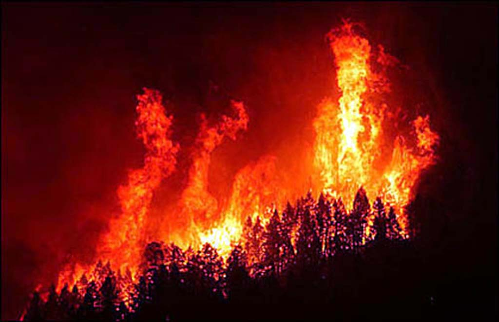 fires role in the ecosystem essay Prescribed fires may contribute changes in air quality air quality of a regional scale is affected only when many acres are burned on the same day.