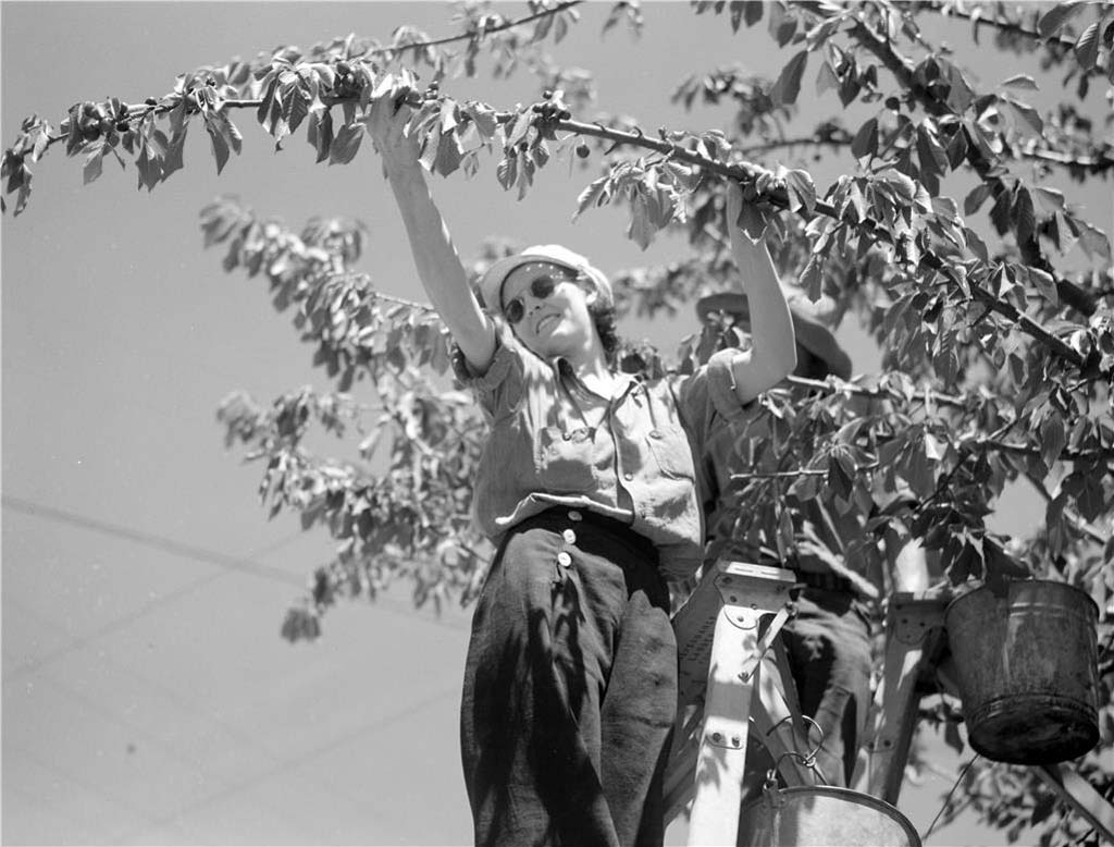 Yakima County -- Thumbnail History - HistoryLink org